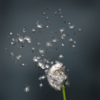3ds max dandelion close animation