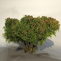 maya pc bush