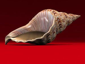 seashell charonia 3d model