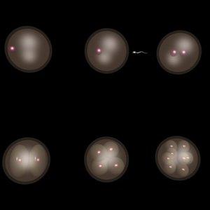 embryo cells 3d model