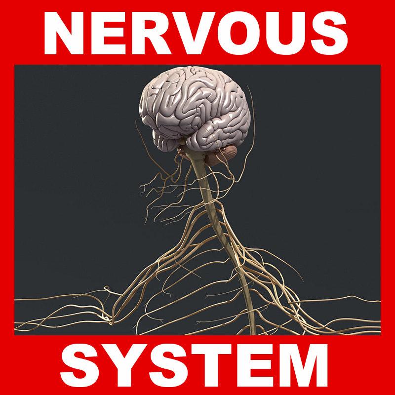 obj human nervous brain