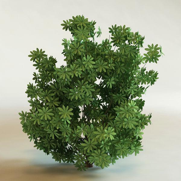 shrubs vol6 collections bush 3d lwo