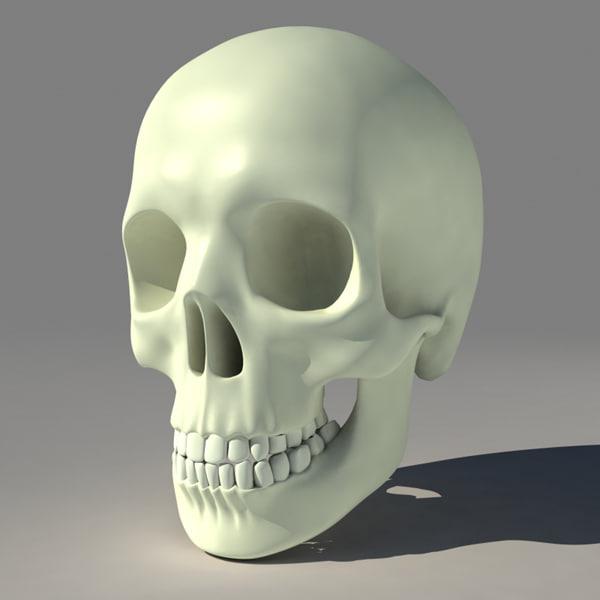 3d model human skull skeleton
