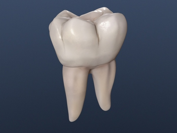 lower permanent molar lwo