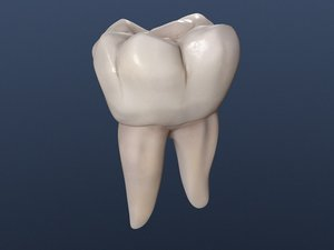 lower permanent molar lwo