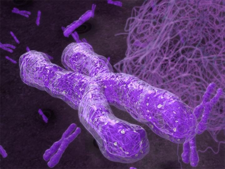 3d chromosome model