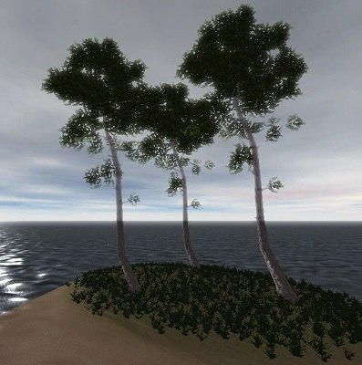 maya middle pine tree