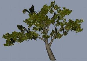 3d model middle apple tree