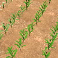 corn field 3d model