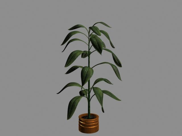 max plant flower