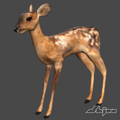 3d model young deer