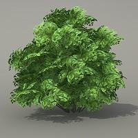 3d model shrub plant