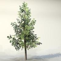 3ds max pc tree