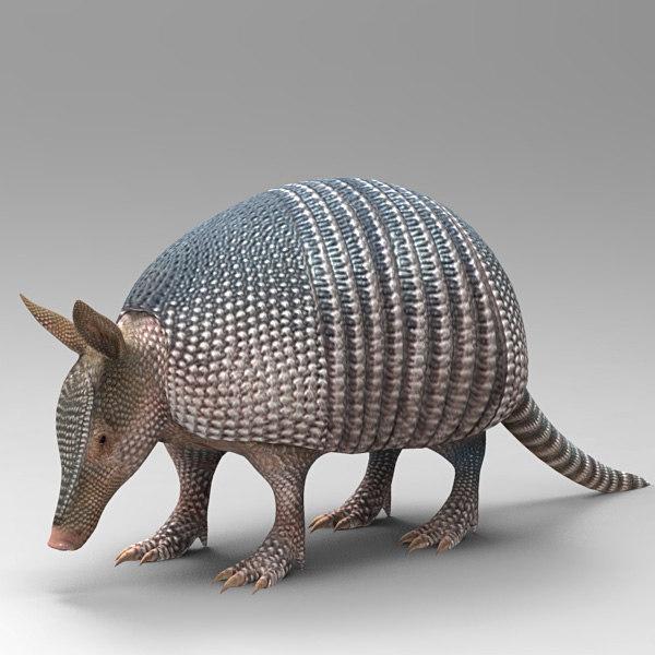 dasypodidae beast animals 3d model