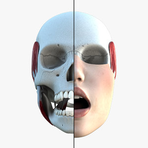 female mouth teeth skull 3d model