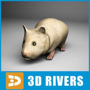 3d hamster animals model