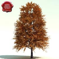 ARNOLD (COLUMNAR TULIP TREE)