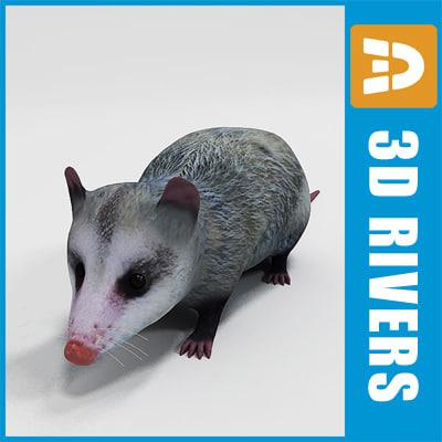 3ds max opossum animals marsupials