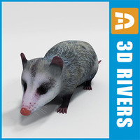 3ds max opossum animals marsupials