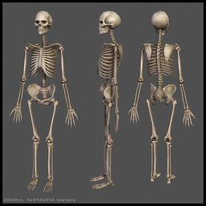 maya skeleton