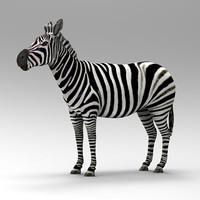 3d zebra horses model