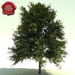 alnus rubra red alder 3d model