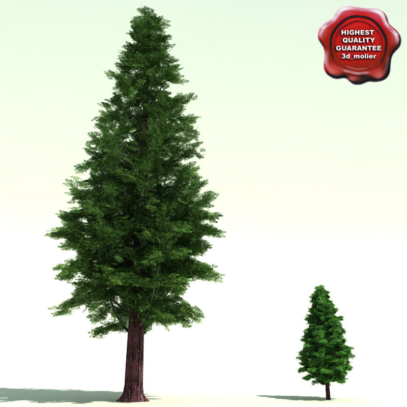 calocedrus decurrens incense cedar 3d model