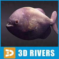 Piranha 01 by 3DRivers