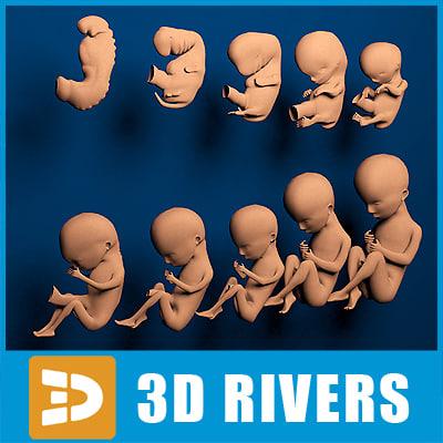 human embryo development 3d obj