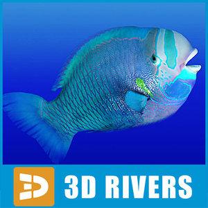 parrotfish fish 3d obj