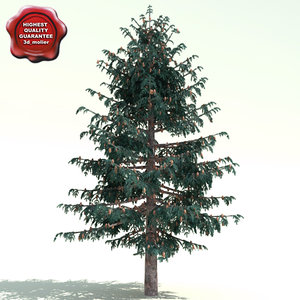3d model of picea sitchensis sitka spruce
