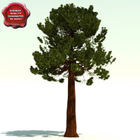 sequoiadendron giganteum giant sequoia 3d model
