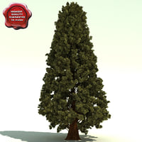 thuja plicata western red 3d model