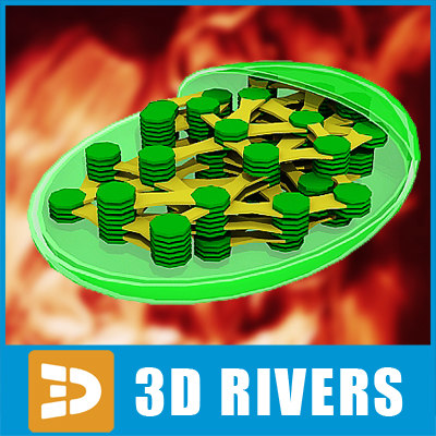 chloroplast vegetable cell 3d model