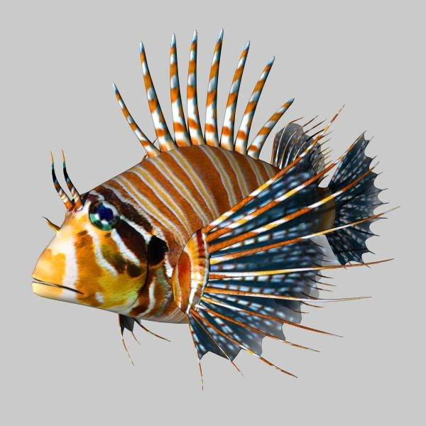 cheetah3d lionfish 3d model