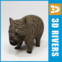 wombat animals marsupials 3d model