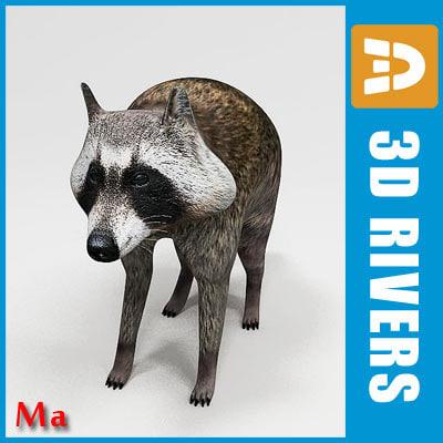 3dsmax animals raccoon coon