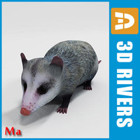 Opossum v1 by 3DRivers