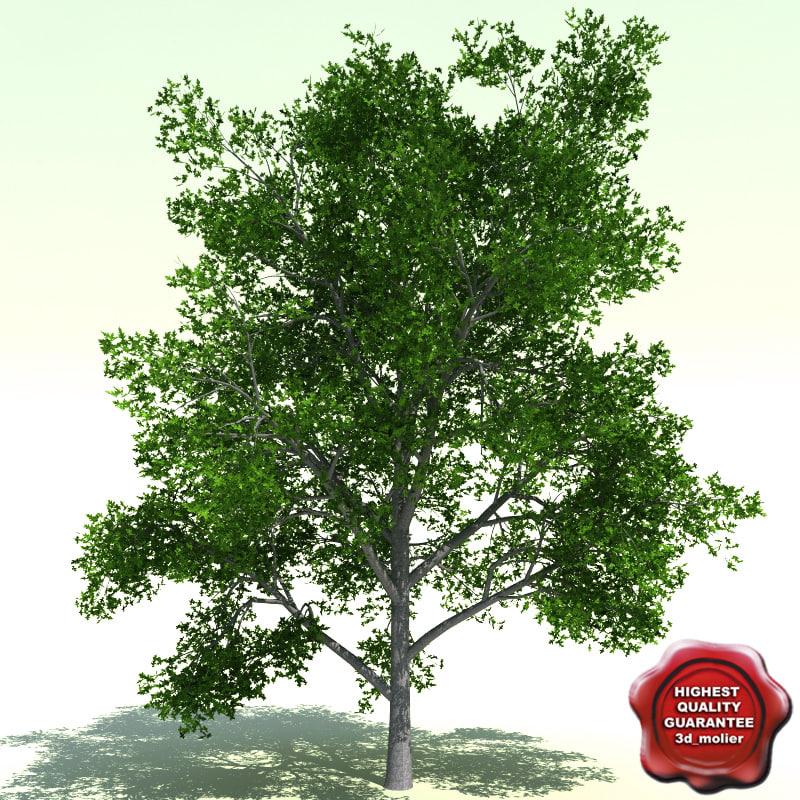 3ds max quercus palustris pin oak