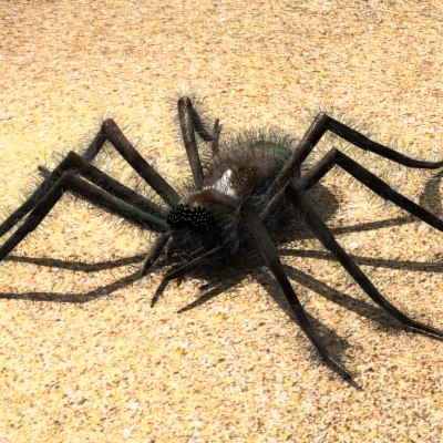 3ds max spider arachnid tarantula