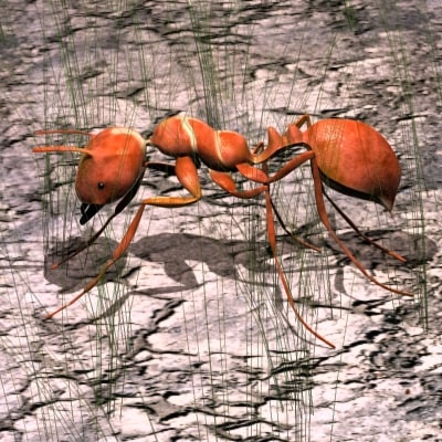 3dsmax red ant