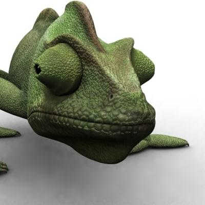 chameleon cameleon reptile ma
