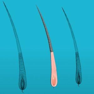 3d model hair anatomy