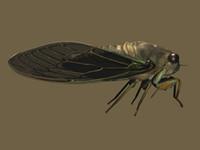 3d model rigged cicada