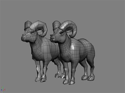 maya bighorn sheep