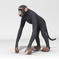 Realistic Chimpanzee - with teeth