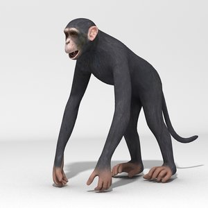 realistic chimpanzee animation teeth 3d model