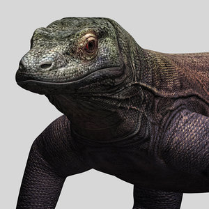 komodo dragon 3d model