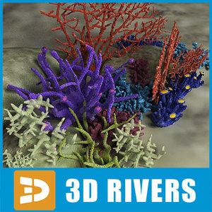 coral set reef 3d model
