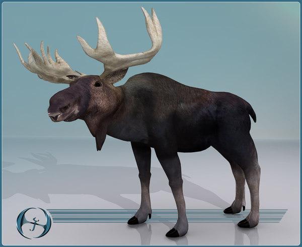 3d moose model